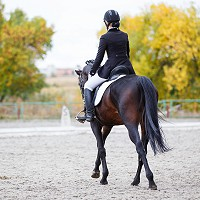 Dressage Results - 2016